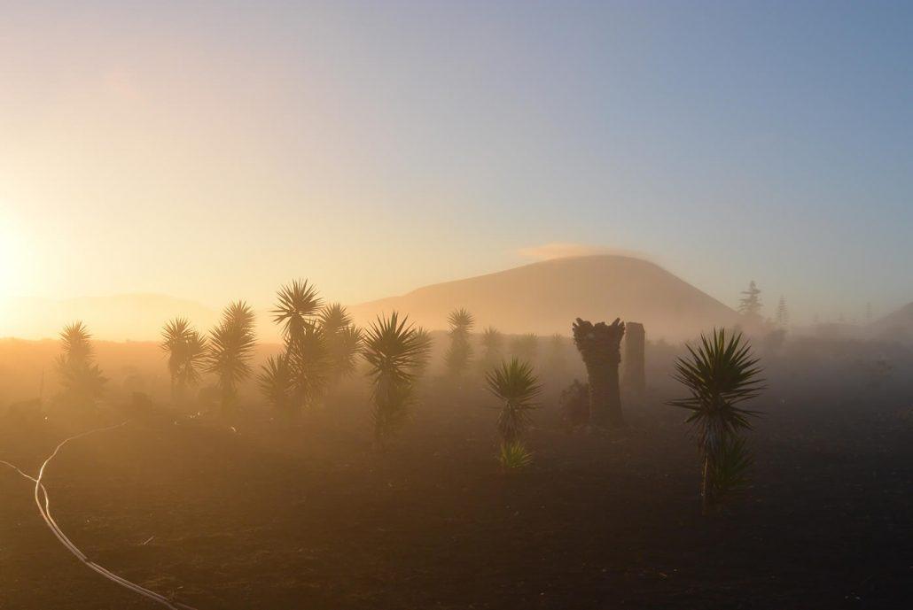 Casa Bermejo | Garten im Nebel