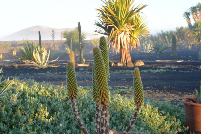 Casa Bermejo - Der Garten